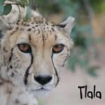 Tlala-Pic-2010