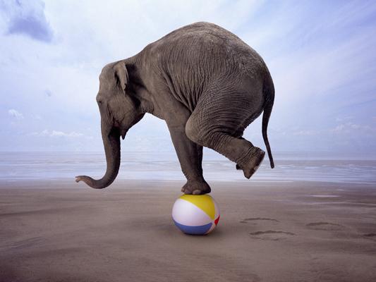 Elephants are social creatures