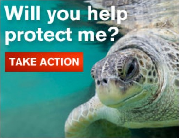 Tell Congress to protect Sea Turtles