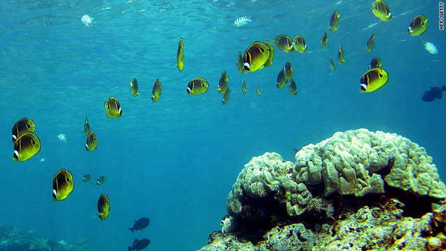 """Marine Life Facing Mass Extinction, report says"" (IPSO) Report"