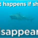 What would happen if Sharks---