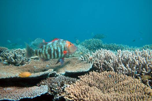SPEAK UP FOR OUR OCEANS