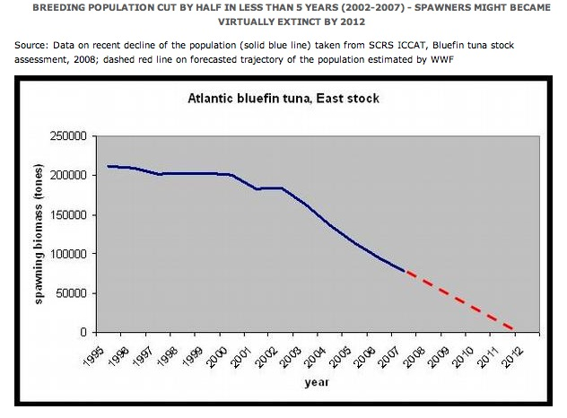 overfishing fish and bluefin tuna Tuna past and present news release – page 1 wwwcomlorg bluefin tuna - past and present marine historians detail collapse of once abundant.