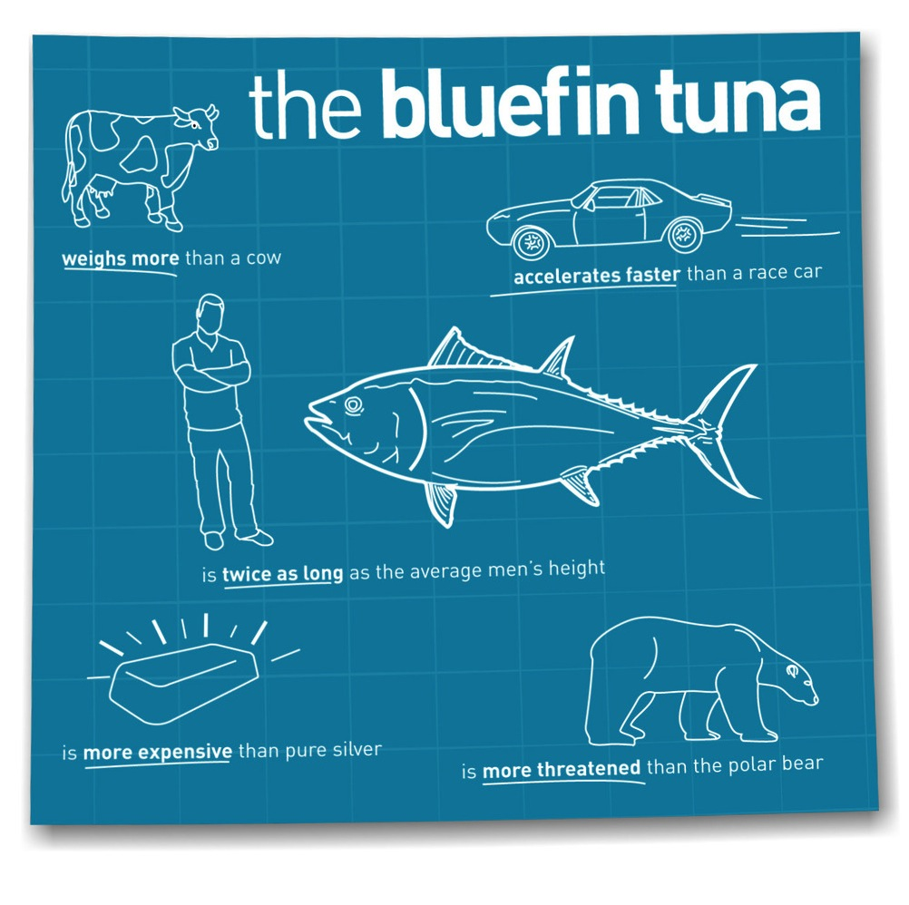 SHOCKING: The Story of the Bluefin