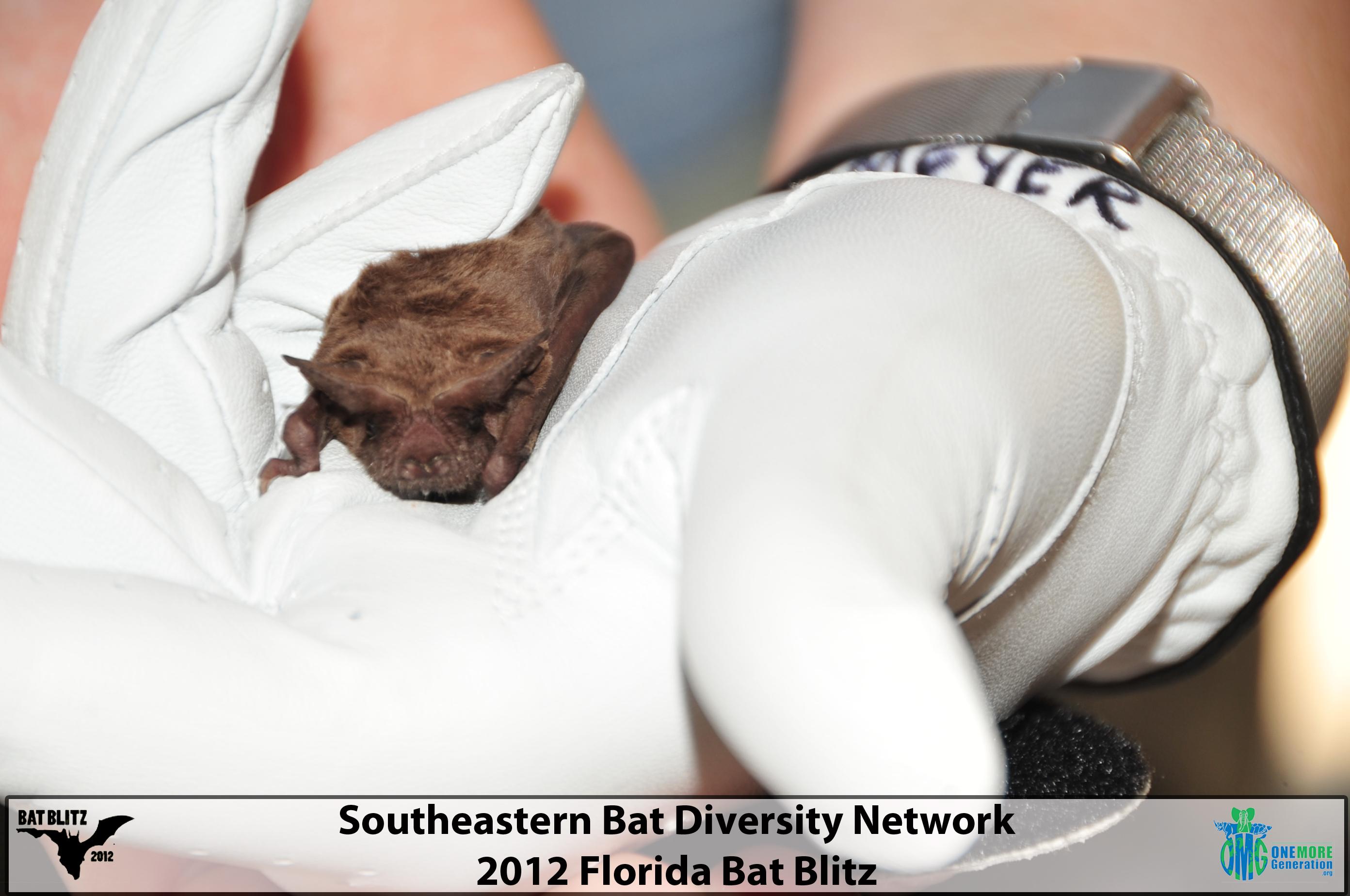 2012 SBDN (Southeastern Bat Diversity Network) Bat Blitz