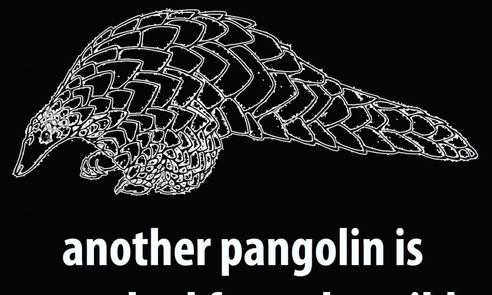 Pangolin Information From Around the World