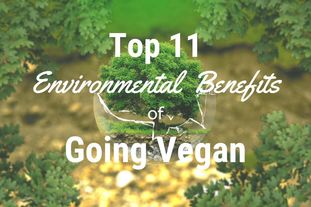 Top 11 Environmental Benefits & Reasons For Going Vegan To Save The Planet